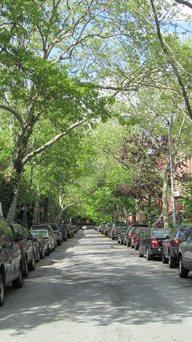 cobble hill tree & car lined street.