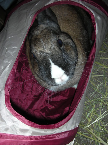 Meezer bun rules the crinkle tunnel