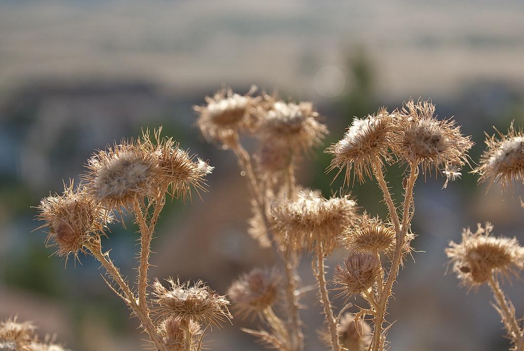 Cappadocia-6129