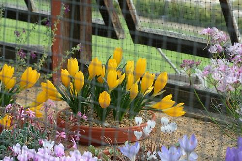 20090919 Edinburgh 20 Royal Botanic Garden 015
