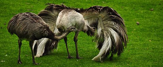 3744609682_11bb0c698c_o The Wildlife Park at Cricket St Thomas -  Chard Somerset, UK UK West Country  Wildlife UK Somerset Gardens