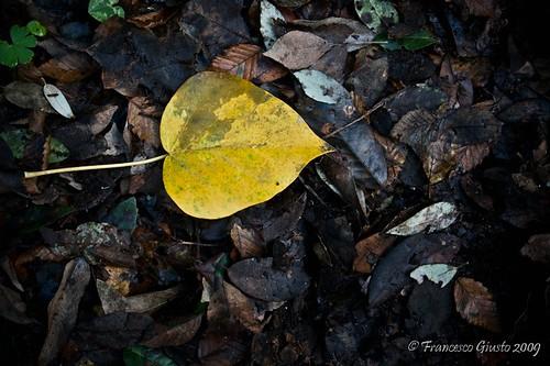Prima che l'autunno finisca