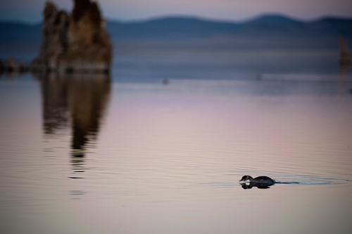 Birds at Mono Lake