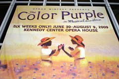 Day 294/365 - The Color Purple