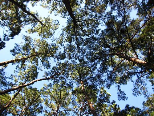 bastrop treetops