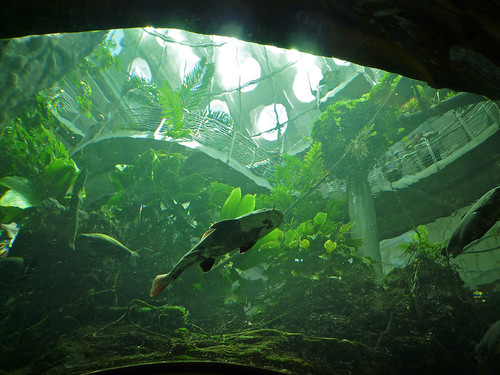 from below the rainforest