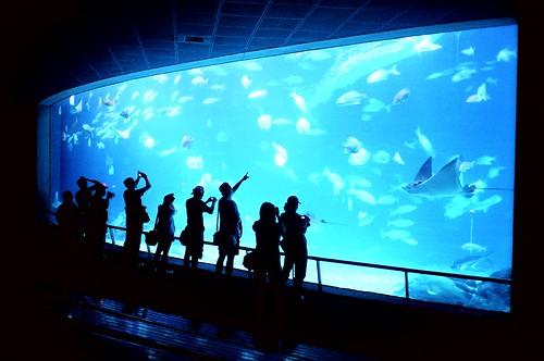[海洋之夜]正在大魚缸前觀賞夜晚的魚群