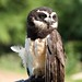Woodland Park Zoo Seattle 070