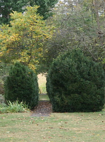 A path in the hedge.