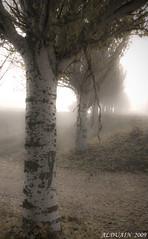NIEBLA/ FOG by ALDUAIN