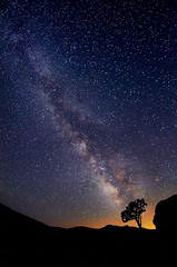 Milky Way and Tree