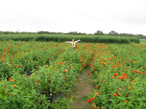 Mrs. Fancy Pants in the flower field