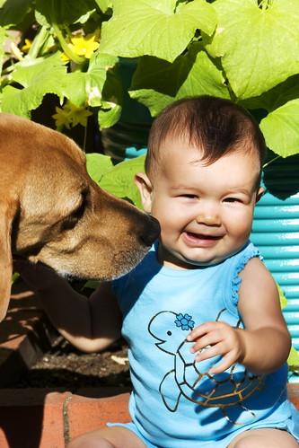Dog Dog Kisses