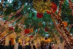 Twinkle light garden at the Wynn in Las Vegas