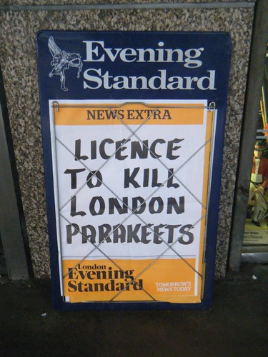 License-to-kill London birds, to license to the kill the birds