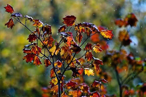 Drizzle Drops Color