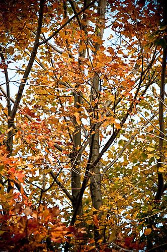 Autumnal Grandeur