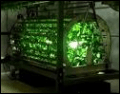 Ferris Wheel plant growing system is pests-free, space-efficient