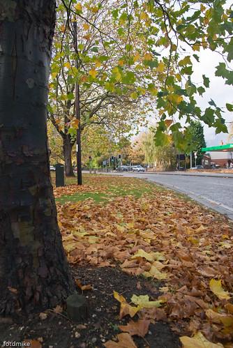 Clapham Road, Bedford _G100532