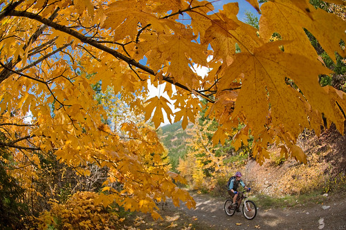 """""""Tenquille Trail Pemberton Oct 24 2009 October 25, 2009"""" by Pat Mulrooney"""