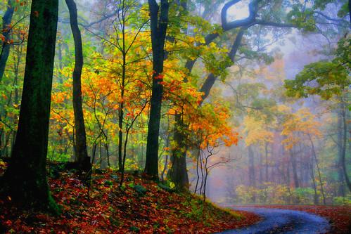 Backlighting Autumn