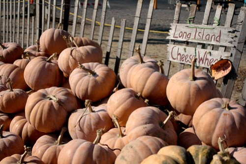 pumpkinpatch (1 of 1)-11