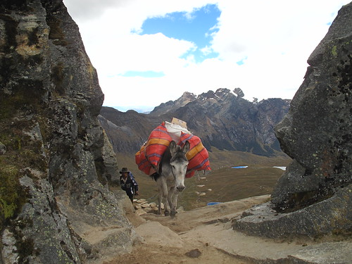 Donkeys arriving at the pass