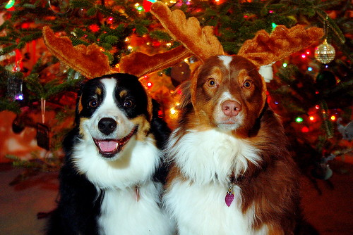 Merry Christmas from Maddy and Scarlett
