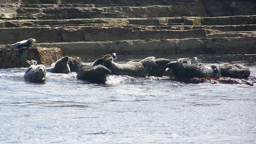 The seals of Stroma
