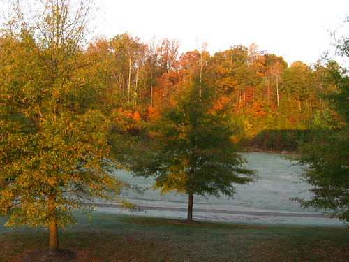 frosty november morning
