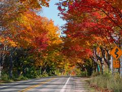 M22 Fall Colors - Leland, MI