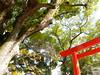 Photo:Nagata Shrine By