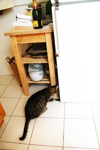 bad cat behavior, ep.10