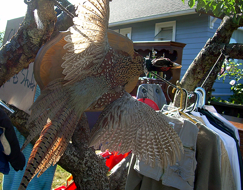Yard sale pheasant