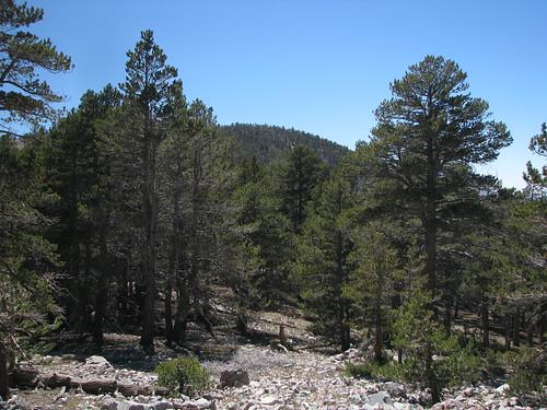 Sugarloaf Mountain 11