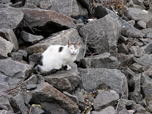 Grand Street Cat, Newtown Creek by you.