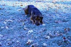 Jasper in the frost 3