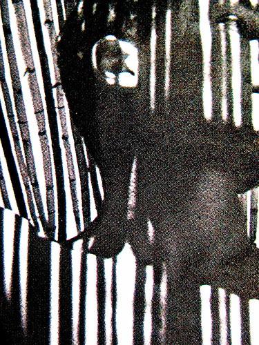 Mario Soldati, La confessione, Mondadori (Oscar Narrativa 1991) 2009; Art Director: Giacomo Callo, Graphic Designer: Susanna Tosatti; alla copertina: © Herbert List / Magnum / Contrasto (part.), 6