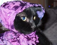 babushka cat 2009-12