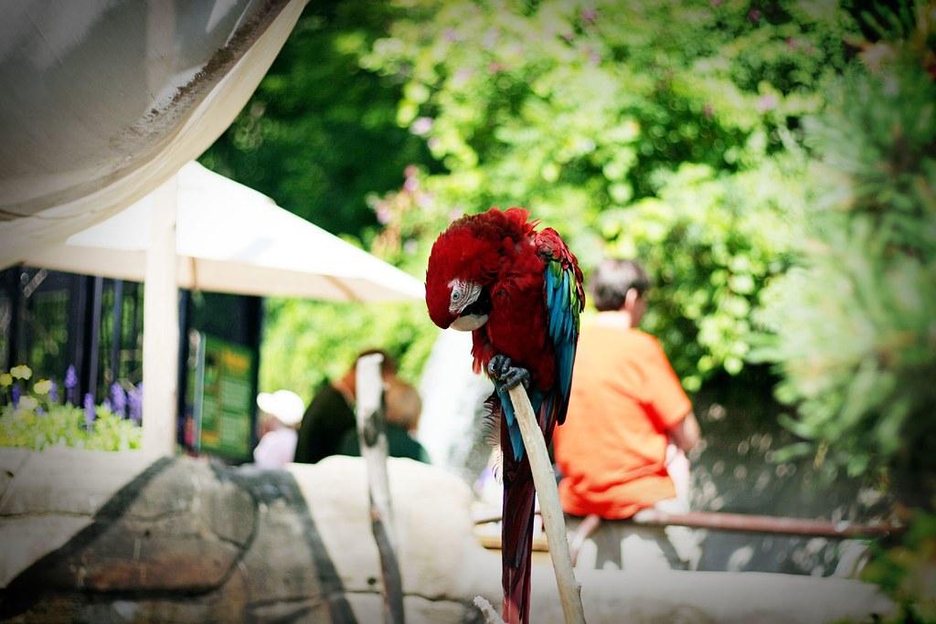 JB Zoo 1