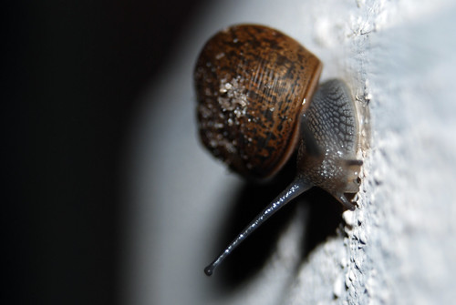 Snail!