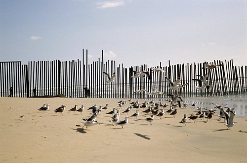 Muri-Stati-Uniti-Messico-580x384