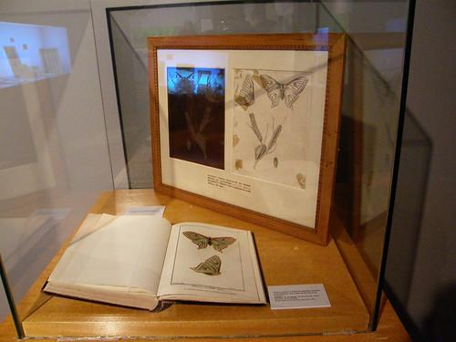 Plancha y prueba del grabado de la descripción de la Graellsia