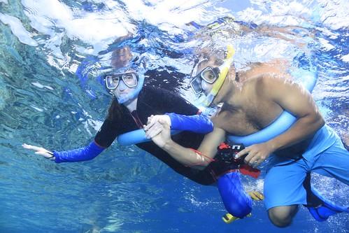 Opal Reef Snorkeling