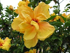 Madeira_Bilder