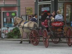 Fjord Horse & Buggy