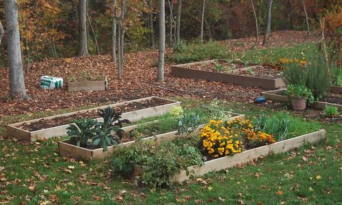 Back Yard Garden Fall 2009