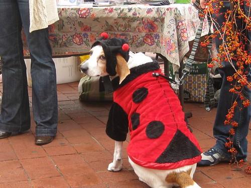 Bake sale - Ladybug