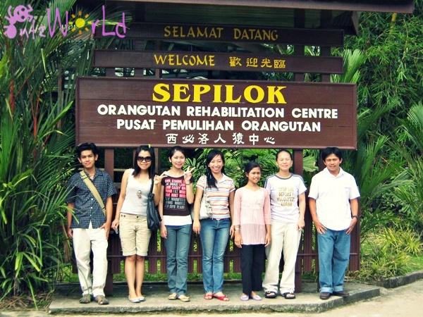 OrangUtan@Sepilok