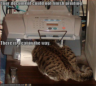 3693814965 8f9dcc9aa3 LOL Cats in your office: I Can Haz Work?